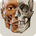 Download 3D Anatomy for the Artist 1.2.7.1 APK