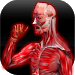Download Anatomy Muscles 1.5.3 APK