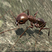Download Ant Simulation 3D - Insect Survival Game 2.6 APK