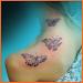 Download Beautiful Butterfly Tattoos Designs Ideas 2.1.1 APK