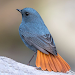 Download Birds Complete Reference Guide 1.5.0 APK