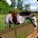 Download Cute Horse Pony Simulator Ride 1.2 APK