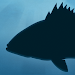 Download Fish Rules 5.0.4 APK