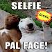 Download Imagenes para Whatsapp 4.1 APK