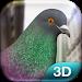 Download Pigeon 1.21 APK