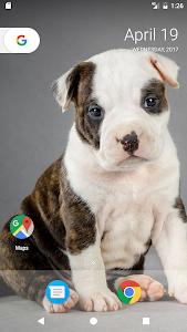 Download Pitbull Pup Wallpaper HD 10 APK