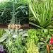 Download Medicinal plants 2.7.0 APK