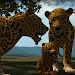 Download Real Leopard Simulator 1.4 APK