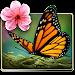 Download Season Zen Free 1.5 APK