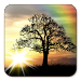Download Sun Rise Free Live Wallpaper 4.8.3 APK