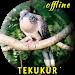 Download Tekukur Pikat MP3 1.0.1 APK