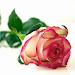 Download poèmes d'amour 5.0.5 APK